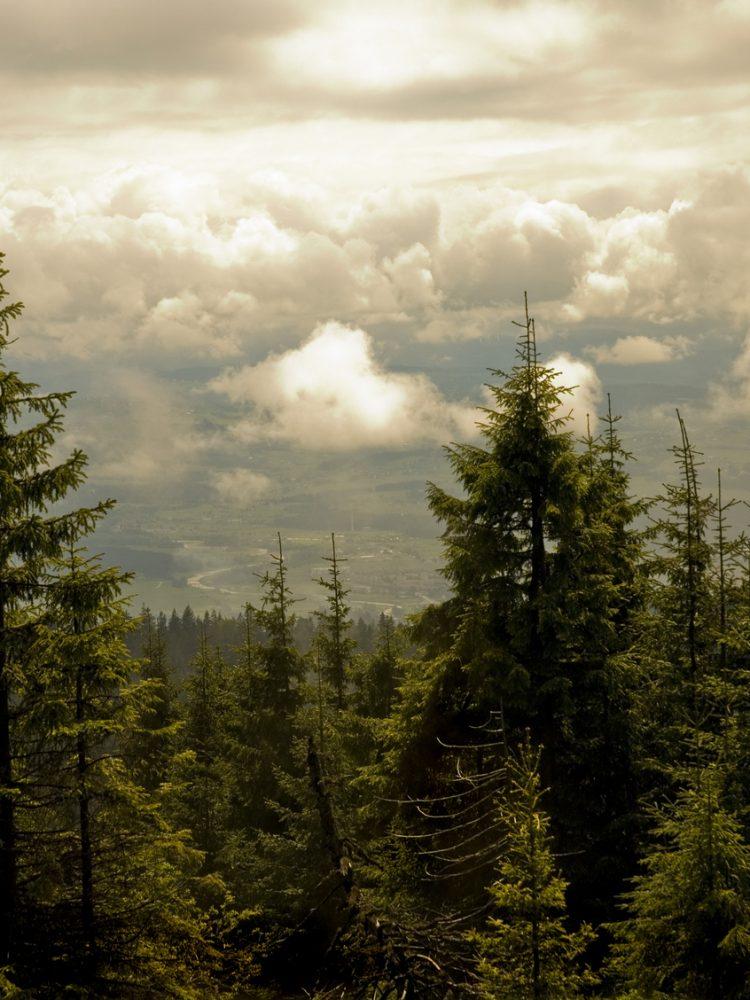 panorama Gorców